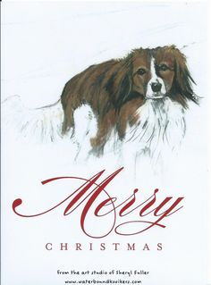 Kooikerhondje Christmas Cards set of 5 by ArtstudioSFuller on Etsy, $10.00