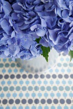Hydrangea #blue #flowers