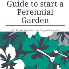 A free guide to start a perennial garden from scratch: - Why choose a perennial . Outdoor Flowers, Outdoor Plants, Outdoor Gardens, Gardening For Beginners, Gardening Tips, Shade Garden, Garden Plants, Garden Site, Plants