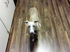 """""""I put new flooring in my house and now they accidentally match my dog."""" -- gemini86, reddit"""