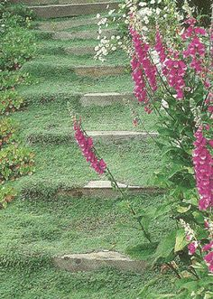 I love the idea of a wooly thyme backyard...no mowing, watering or weeding! And it's so soft on barefeet...