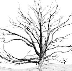 Baum - Impressionen 2