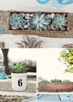 Succulent table number and centerpiece (from my original inspiration table)