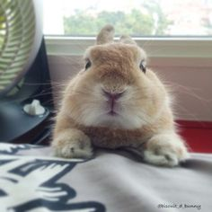 AND THEIR ADORABLE BUTTON NOSE CANNOT BE FORGOTTEN. | 19 Reasons Bunnies Are The Most Underrated Pet