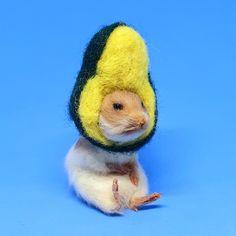 Taxidermy Hamster in an avocado hat Hamsters, Hamster Clothes, Taxidermy, Avocado, Cute Animals, Kawaii, Bird, Hats, Pets