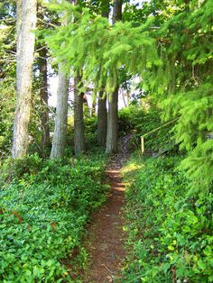 forest path - Puget Sound (Anderson Island)