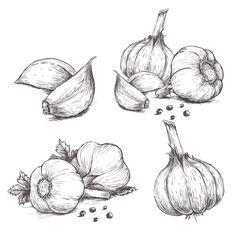 16 Scientific Health Benefits of Garlic – Facts, Nutrients, Benefits 16 Scientific Health Benefits of Garlic – Facts, Nutrients, Benefits Drawing Sketches, Pencil Drawings, Art Drawings, Drawing Ideas, Botanical Art, Botanical Illustration, Koch Tattoo, Vegetable Drawing, Garlic Health Benefits