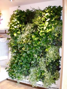Live Plants Create A Soothing Environment In Your Home or Office | Plantscapers