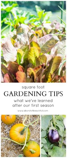 Square Foot Gardening Tips - What we've learned after the first season