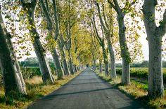 Tree Lined Road in Ventenac en Minervois France   photography by http://www.beckyrui.com/