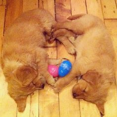 Easter puppies <3