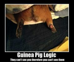 Guinea Pig Logic. So true.