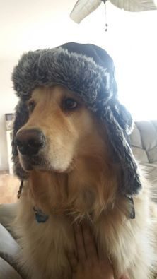 Getting the pupper ready for the cold.