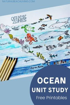 Ocean Lesson Plans, Science Lesson Plans, Sea Activities, Science Activities For Kids, Teaching Science, Biology For Kids, Ocean Zones, Ocean Unit, Under The Sea Theme