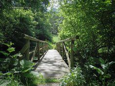 Über diese Brücke musst du gehen, um einen Bach zu überqueren.                                                           bbb