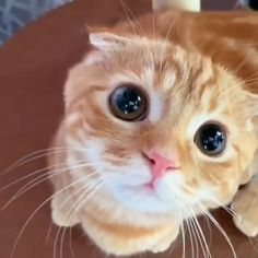 Funny Cute Cats, Cute Baby Cats, Cute Cats And Kittens, Cute Funny Animals, Kittens Cutest, Kitty Cats, Super Cute Animals, Cute Little Animals, Baby Animals Pictures