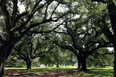 Plantation tour in New Orleans #usa #travel
