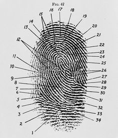 Fingerprint diagram, 1940 Frederick Kuhne, The Finger Print Instructor…Based upon the Sir E. R. Henry System of Classifying and Filing…, New York National Library of Medicine