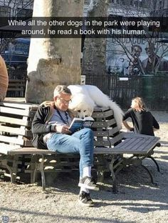 Are you looking for dog memes or other animal memes photos? Here we share 40 funny dog memes photos that make your day more cool, entertaining and awesome. Funny Animal Memes, Dog Memes, Cute Funny Animals, Funny Animal Pictures, Cute Baby Animals, Funny Cute, Funny Dogs, Funny Memes, Happy Animals