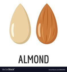 Almond icon flat style vector image on VectorStock Cheese Cartoon, Fruit Cartoon, Flat Illustration, Character Illustration, Coffee Cup Design, Logo Design, Graphic Design, Interactive Design, Almonds