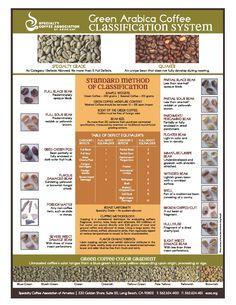 Green Arabica Coffee Classification System