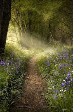 ~J   Early morning light....Bluebells