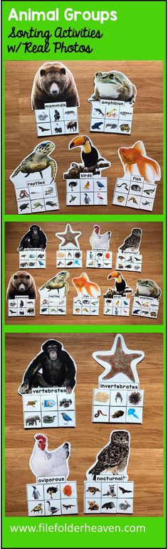There are so many ways to classify and identify animals.  These Animal Groups Sorting Mats (w/Real Photos) help students do just that.  In an independent work station, science center or as a small group activity, students can practice sorting animals with the 9 mats included.  Sorting Mats Included:  Vertebrates Invertebrates Nocturnal Animals Oviparous Animals Mammals Reptiles Birds  Fish Amphibians.