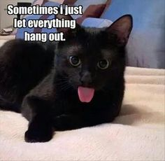 Funny Animal Pictures Of The Day Black Katz Pinterest - 24 hilarious pictures will make day instantly better 9 best ever