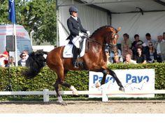 Gelderland stallion Alexandro P