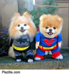 Cute little dog Halloween outfits! Super hero pet costumes. Just Adorable!!!!