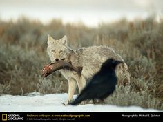 68 best nature at it s own national geographic images wild animals rh pinterest com