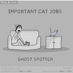 Both of my ginger cats Tigger the fiery one and Sir Lancelot spotted ghosts and acted scared- AT EMPTY AIR. Crazy Cat Lady, Crazy Cats, I Love Cats, Cool Cats, Funny Cats, Funny Animals, Cats Humor, Funny Horses, Kitten Baby