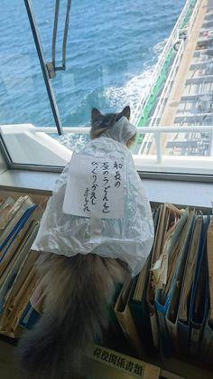 船長のうどんをこぼして反省中?のネコのカンパチwwwwwwwww