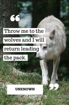 Throw me to the wolves and see what happens #motivationalquotes