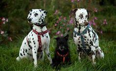 Fünf Kommandos sind die Grundlage für die Hundeerziehung. Wenn Ihr Hund die beherrscht ist er für die meisten Alltagssituationen gewappnet