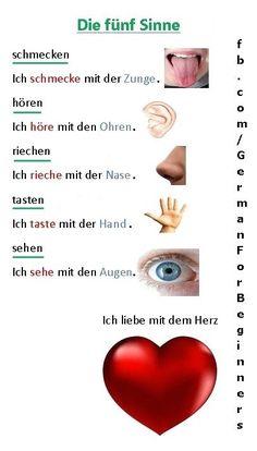 senses in German Study German, German English, English Study, Learn English, German Language Learning, Learn A New Language, Dual Language, English Language, German Grammar