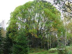 We had this huge beautiful tree..