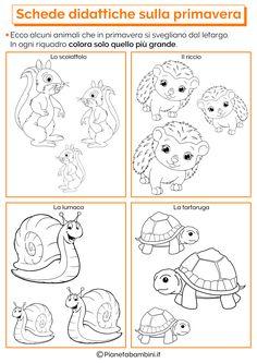 Schede Didattiche sulla Primavera per la Scuola dell'Infanzia | PianetaBambini.it Turtle Crafts, Colouring Pages, Preschool, Dads, Kids Rugs, Google, Maze, Party, Spring