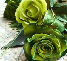 #roses #green