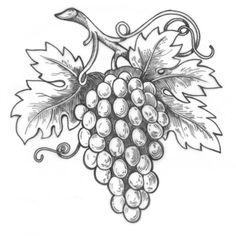 Best 12 vine leaves corner, black-white by dokoupilova, via Shutterstock – SkillOfKing. Grape Drawing, Leaf Drawing, Pencil Art Drawings, Easy Drawings, Vine Tattoos, Black And White Drawing, Black White, Carving Designs, Art Carved