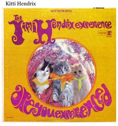 Kittens on famous album covers