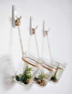 Air plants in glass jars hanging from wall with 3M hooks, planter or vase
