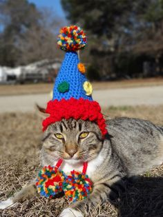 Kitty's party hat
