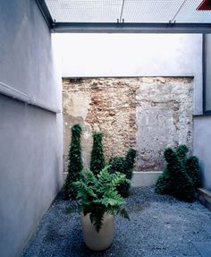 A little glass-enclosed garden with no shelter.