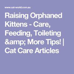 Raising Orphaned Kittens Care Feeding Toileting Amp More Tips Cat Care Articles Kittens Cat Care Kitten Care