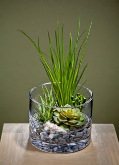 The succulent plants are wonderful choices for miniature garden design, making beautiful eco gifts and decorating rooms or outdoor living spaces Succulent Bowls, Succulent Centerpieces, Succulent Gardening, Garden Terrarium, Succulent Arrangements, Succulent Terrarium, Garden Plants, House Plants, Centerpiece Ideas