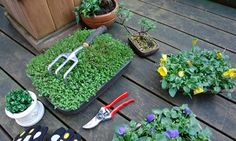 Pozwól nam wypielęgnować Twój ogród w czasie kiedy Ty będziesz spokojnie relaksował się :) bądź w czasie kiedy nie będzie Cię w swoim ogrodzie marzeń - my go wypięlęgnujemy a Tobie pozostanie tylko odpoczynek :)  http://green-land.com.pl/oferta-ogrodu/pielegnacja-ogrodow-poznan/