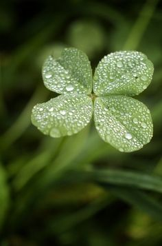 Ireland in my heart, mind & soul http://mysoulfulhome.com/ireland-heart-happy-st-patricks-day/ via bHome https://bhome.us