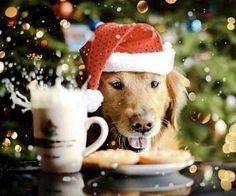 Avoid feeding your #dog mince pies chocolate or sweets over the festive period! #LoveDogs #AlternativeToKennels