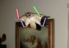 """""""...and this is for Chipwrecked!""""  - Jedi Squirrel"""